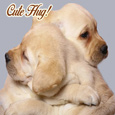 A Cute Hug.