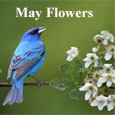 Beautiful Blooms Of May!