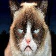 Grumpy Cat Says Hey, Have...