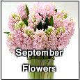 Sending September Flowers...