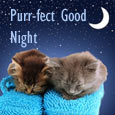 Purr-fect Good Night Wishes!
