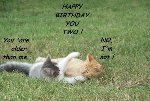 Birthday Sibling Kittens.