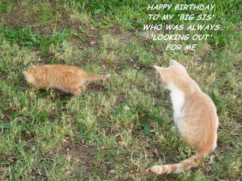 Birthday For Big Sister Kittens.