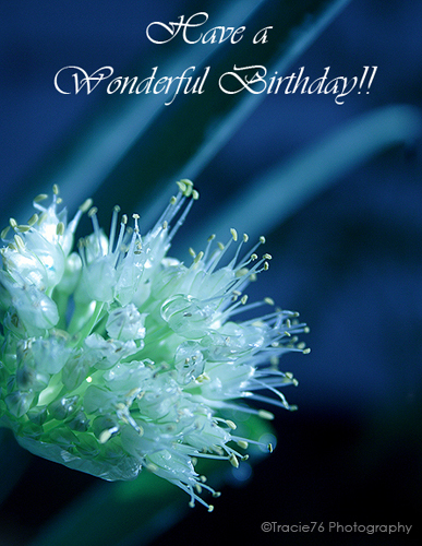 Sending you birthday wishes free flowers ecards greeting cards customize and send this ecard sending you birthday wishes bookmarktalkfo Choice Image