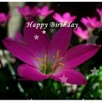 Happy Birthday To Your Dear One.