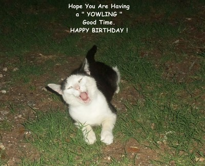 Happy Birthday Yowling Cat
