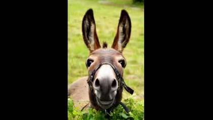 Donkey Birthday Greeting For Friend Free For Best Friends