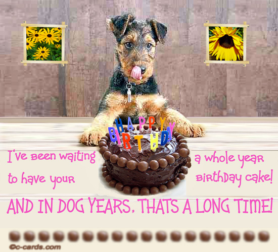 To Eat Your Birthday Cake Funny Card For A Dog Lover