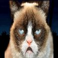 Home : Birthday : Funny Birthday Wishes - Grumpy Cat Happy Birthday Song.