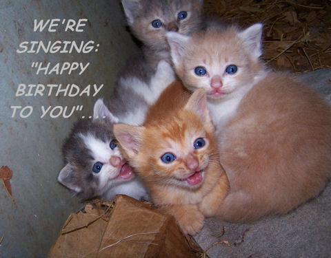 Well HAPPY Birthday  Tom  A little late     Funny Happy Birthday Kitten