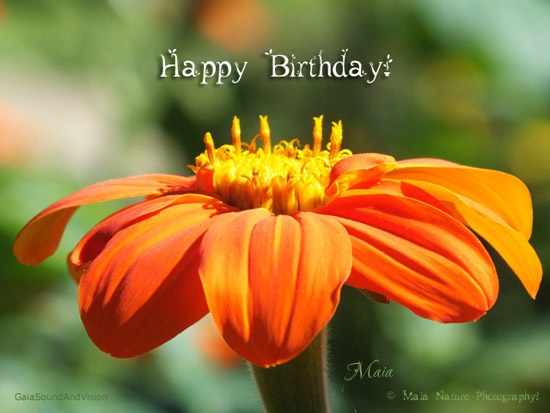 Birthday Flowers Free Happy Birthday Ecards Greeting