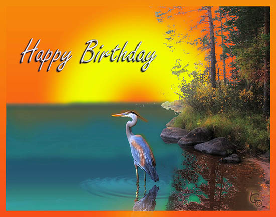 Birthday Heron On The Lake.