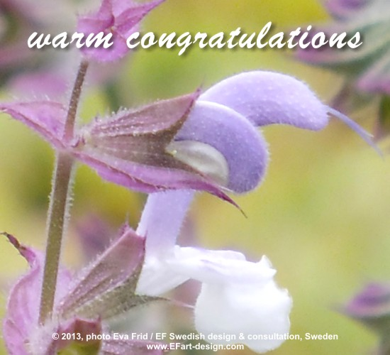 Warm Congratulations.