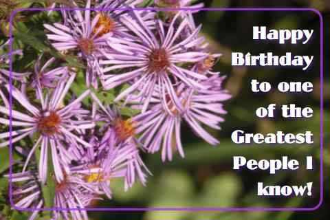 Happy Birthday Purple Flowers.
