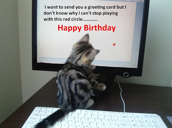 birthday greeting from kitty  free happy birthday ecards