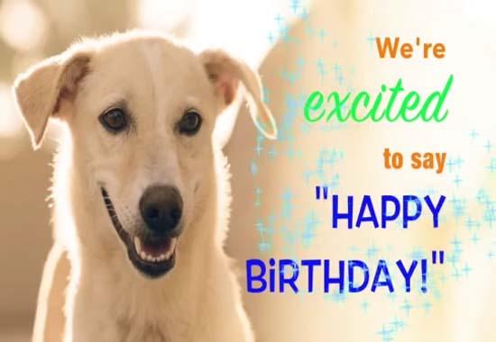 Hairy Furry Amp Feathery Birthday Free Happy Birthday