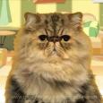 Grouchy Cat Happy Birthday...