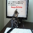 Birthday Greeting From Kitty.