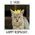 Grumpy Sarcastic Cat.