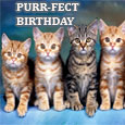Have A Purr-fect Birthday!