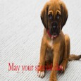 Home : Birthday : Happy Birthday Messages - Happy Birthday Furry Friends.