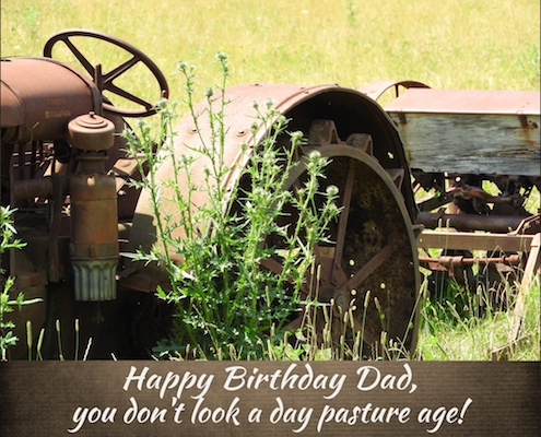 Not A Day Pasture Age.
