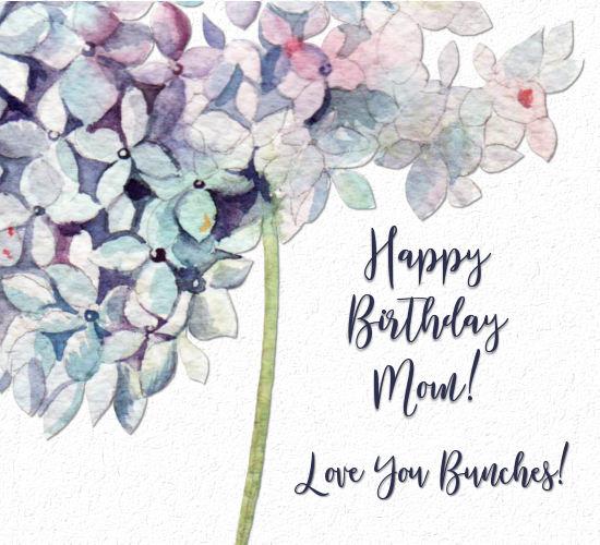 Happy Birthday To Mom, Hydrangea.