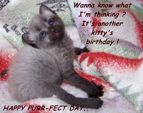 Pet Birthday Kitten Free Pets ECards Greeting Cards