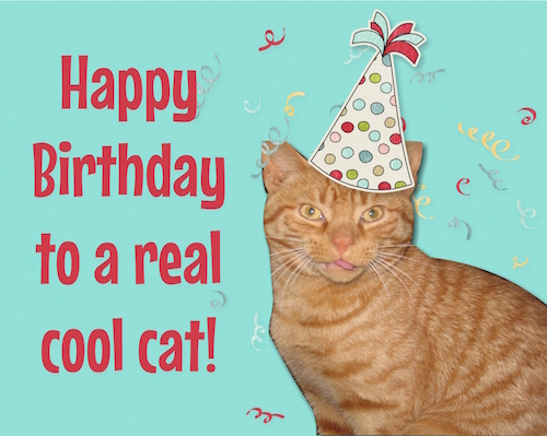 Happy Birthday To A Real Cool Cat. Free Pets ECards