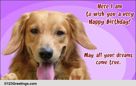 Free Pets ECards Greeting Cards