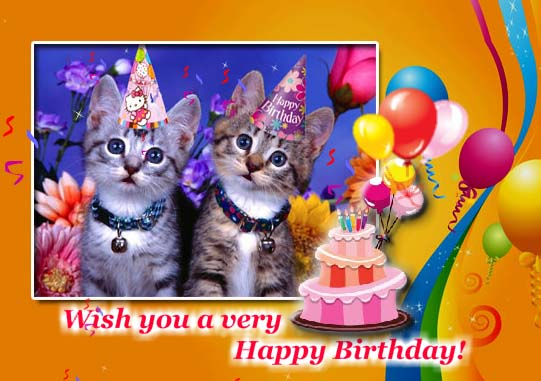 Cute Cats Free Pets Ecards Greeting Cards 123 Greetings