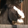 Home : Birthday : Pets - Happy Birthday Horse Style!