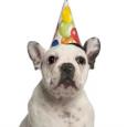 Hey Dog Happy Birthday Card.