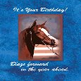 Home : Birthday : Pets - Birthday Horse On Blue...