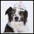 Home : Birthday : Pets - Happy Birthday Funny Dog Style.