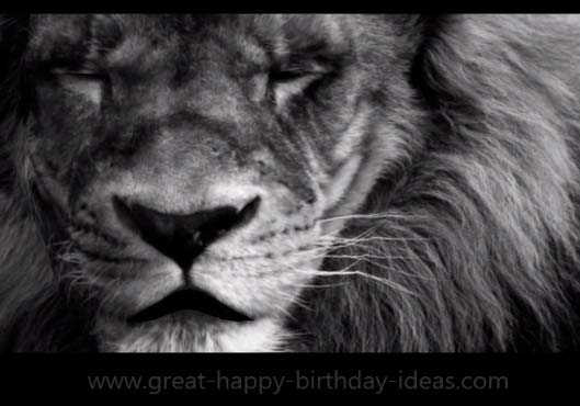 A Mighty Lion Birthday Wish Free Specials Ecards
