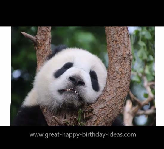 Happy Birthday Panda Style Free Specials Ecards Greeting