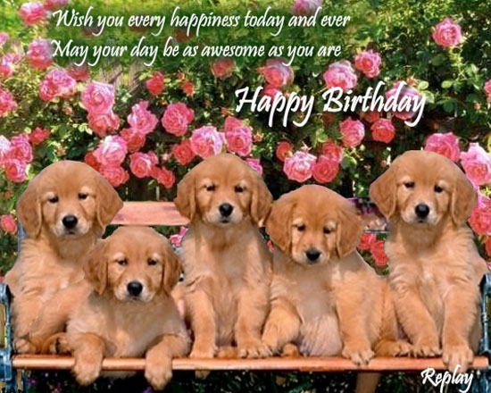 Video Of Dogs Barking Happy Birthday