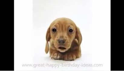 Puppy Dog Birthday Video Song Free Wishes ECards