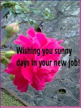 Sunny Days In New Job.