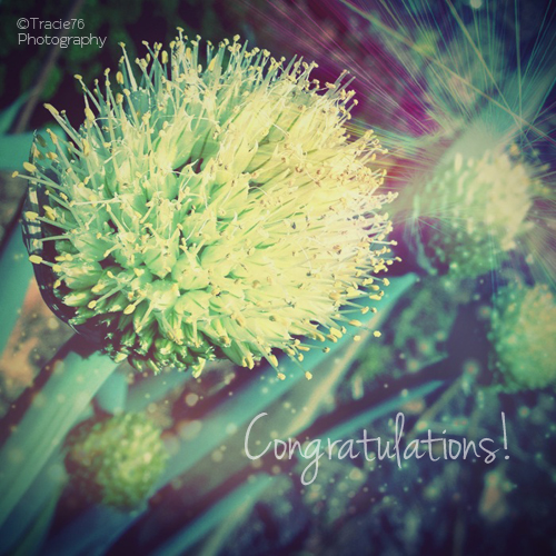 Congratulaions.