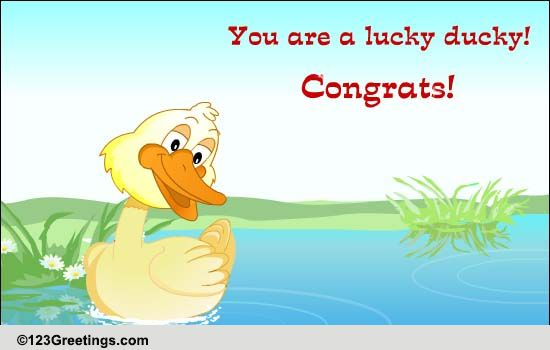 congrats you lucky ducky  free for everyone ecards  greeting cards