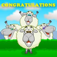 Home : Congratulations : For Everyone - Baa-bershop Congratulations!