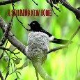 New Home Nest...