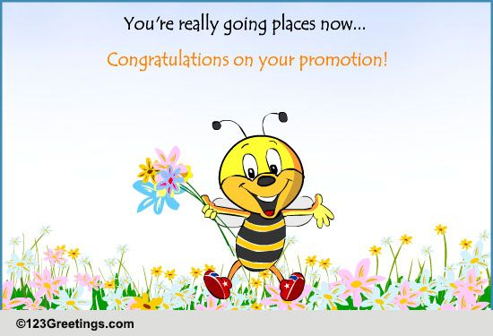 Congratulations on promotion free promotion ecards greeting cards congratulations on promotion free promotion ecards greeting cards 123 greetings m4hsunfo