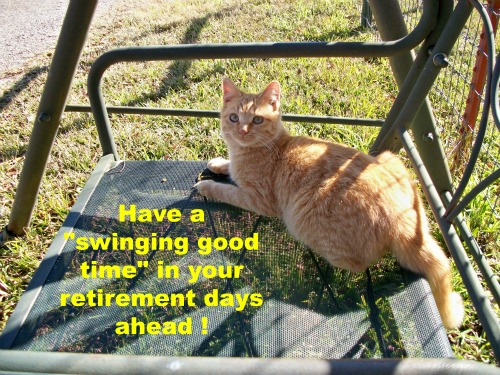 Retirement Wishes From A Cat!