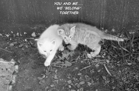 Cute Kittens.