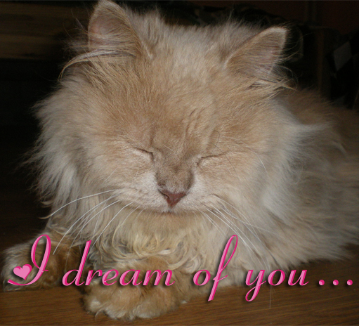 I Dream Of You...