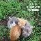 Cuteness Kittens.