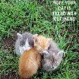 Home : Cute Cards : Cute Etc - Cuteness Kittens.